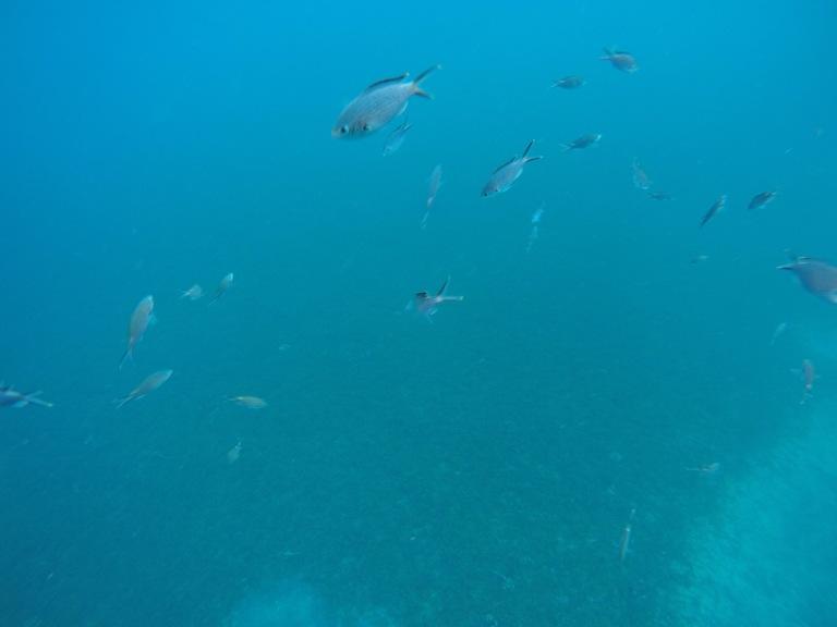 Snorkeling aux Antilles